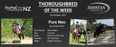 "Neo was raced under the name Wave Rider and began her career with Waiuku trainer Moira Murdoch. After a few starts with not much luck, Neo was transferred to Jan Hay's stable in Ashburton. Neo's best race result was a 2nd placing in a New Zealand Bloodstock Pearl Series race specially for mares and fillies. The Cecconi mare retired off the track with $2,920 to her name after 9 starts. A week after retiring from the track Neo found herself with her new owner, Hayley Thomas who works in marketing and graphic design. Hayley has been focusing on dressage with Neo and recently attended a few local dressage days, which she took in her stride, with scores consistently over 60% at beginner level. They have also won Champion Inhand and Reserve Champion Ridden exhibit and have begun jump schooling and completed 2 eventing starts.Neo has been a special horse to Hayley right from the start and is known as 'Princess Pony' around home. Hayley describes her as a ""special lovely sweet horse"" and goes on to say Neo is a true representation of how incredible the TB breed is - versatile, willing, trainable and lovable. Looking ahead to the future Hayley is hoping to produce Neo into a solid all-rounder as she seems to excel at whatever she is faced at!"