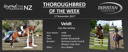 "Given he is by Volksraad and out of a Kaapstad mare, it is no surprise that Veldt was bred and sold by Windsor Park Stud, the home to both of these champion sires during their time at stud.  As a yearling he caught the eye of trainer, Murray Baker who purchased him for $75,000 at the 2008 NZB Select Yearling Sale.  He quickly proved to be an astute purchase, performed in the highest of company as a 2yo with placings in both the Group 2 Wakefield Challenge Stakes and the Listed Karaka Million.  When he retired after his last race in January 2014, Veldt had accumulated a total of 39 starts for 6 wins, 15 placings and over $127,000 in stakes.  It didn't take him long to adjust to his new life as a sporthorse with the Irvine family and competed in showjumping up to 1.25m as well as showhunter before becoming a member of the Walker family.Together Brea and Veldt have picked up a number of wins and placings in showhunter, showjumping and eventing.  At home, Veldt is affectionately known as ""Mr Tidy Toes"" due to being 'the most careful showjumper while also being brave and covering the ground well on the XC course"". Brea has recently decided to offer Veldt for sale, she says "" he is very sadly for sale but it's his time to teach someone else everything he has taught me"" and until the perfect person comes along they will continue to aim for pre-novice eventing and qualifying to compete in the showhunter ring."